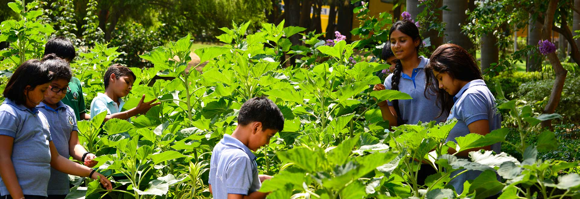 Pathways World School Aravali - Green Pathways